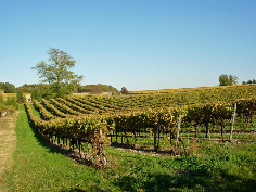 Nearby Vineyards